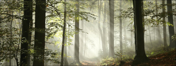 Glas-Bild Forest Feeling I