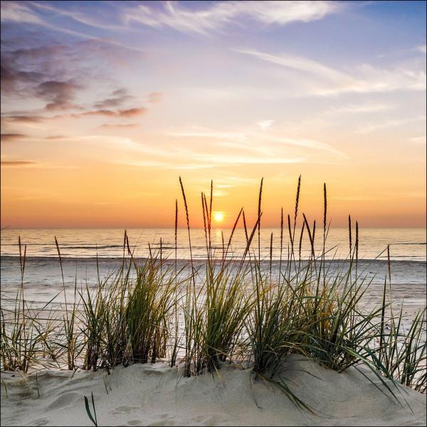 Glas-Bild Lonely Dune