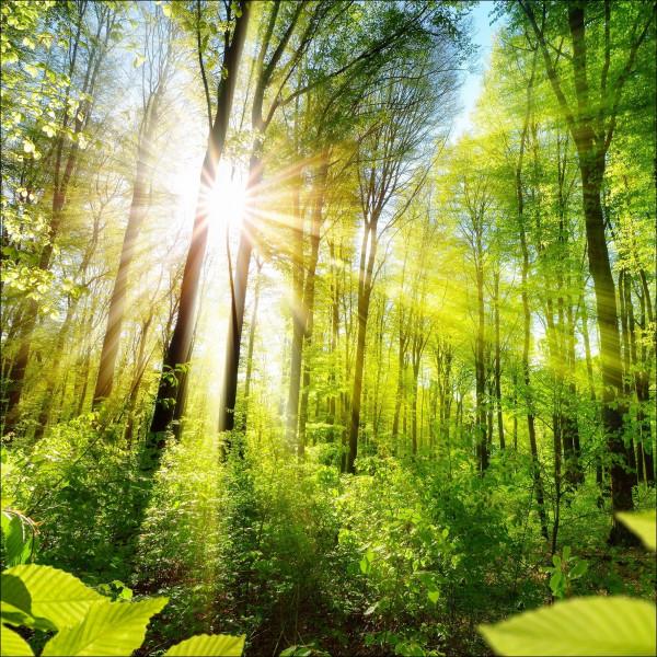 Glas-Bild Towards The Sun