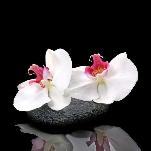 Glas-Bild White Orchid V