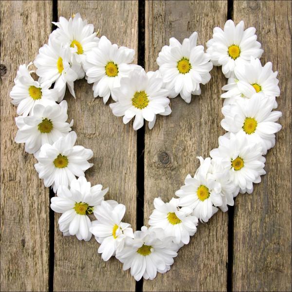 Glas-Bild Flower Heart I