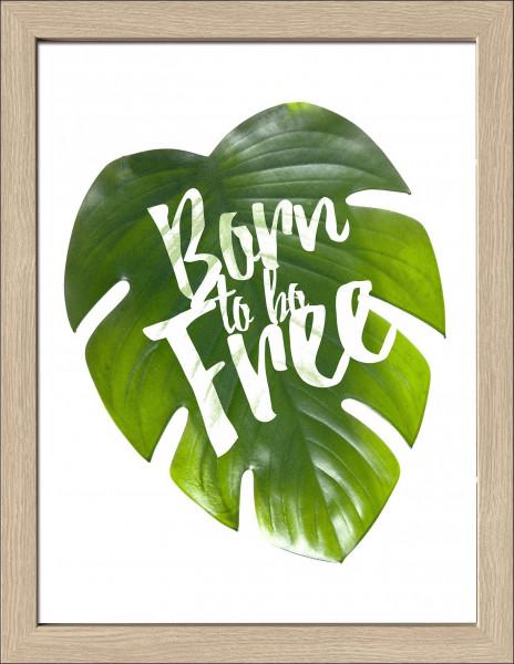 Bild gerahmt Born Free