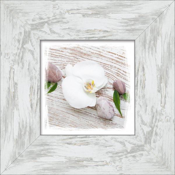 Bild gerahmt White Spring IV