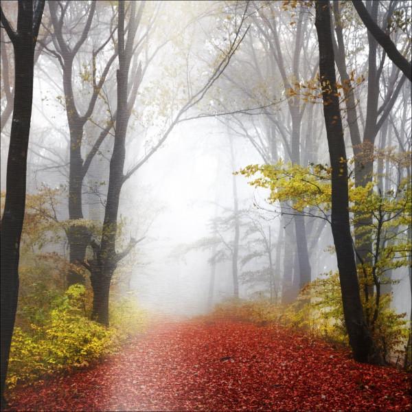 Alu-Bild Mystic Forest