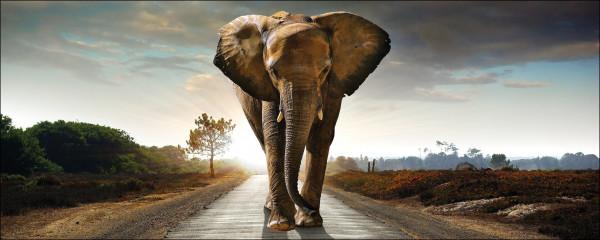 Glas-Bild Elephant
