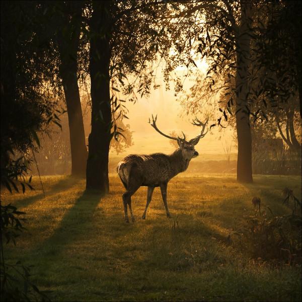 Glas-Bild Deer & Sun